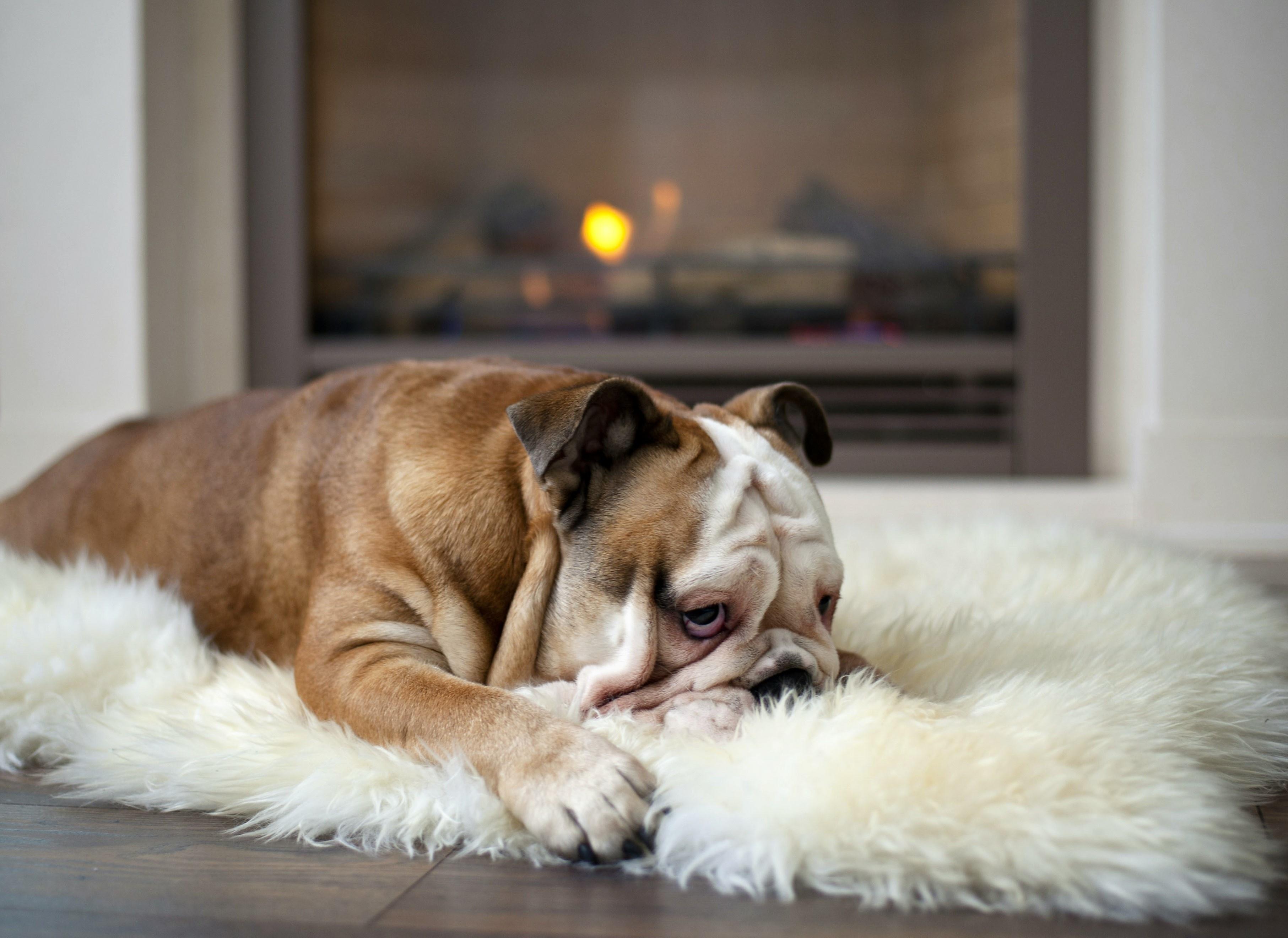 Že pri zelo nizkih izpostavljenostih ogljikovemu monoksidu se zazna glavobol in omotičnost, kateri sledi blodnja in nezavest.